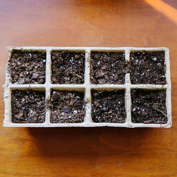 Plant Service Ideas